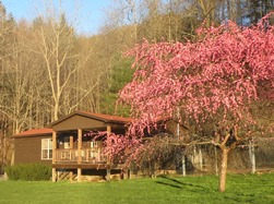 Chestnut Mountain cabin spring